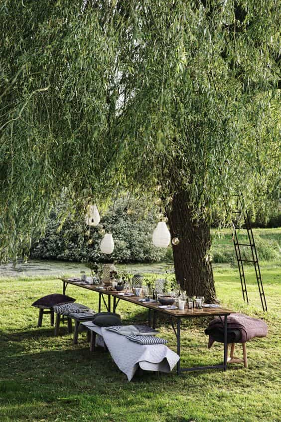 Table dressée sous un arbre - garden party